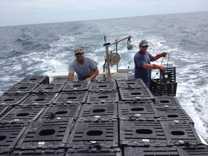 Baiting traps and putting them into the water