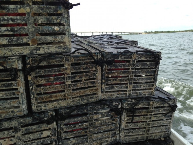 Traps being hauled out to the Gulf