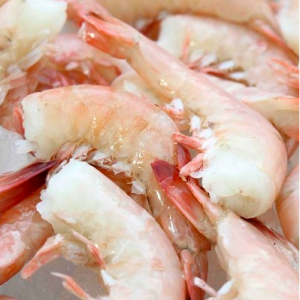 Gulf Pink Shrimp