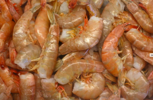 Texas Brown Shrimp